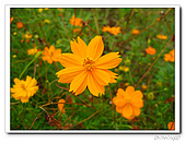 知卡宣森林公園:IMG_1781.jpg