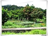 湖山國小登山步道:IMG_2317.JPG