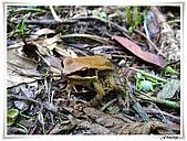 自然生態攝影(20110714Updated):IMG_3019.JPG
