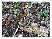 自然生態攝影(20110714Updated):IMG_3014.JPG