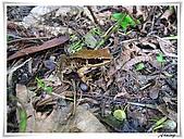 自然生態攝影(20110714Updated):IMG_3015.JPG