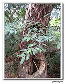 芝山岩自然公園(20090321):IMG_5833_nEO_IMG.jpg