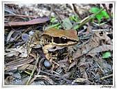 自然生態攝影(20110714Updated):IMG_3016.JPG
