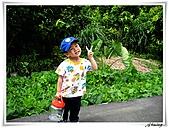 湖山國小登山步道:IMG_2324.JPG