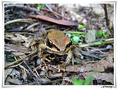 自然生態攝影(20110714Updated):IMG_3018.JPG