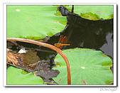 知卡宣森林公園:IMG_1789.jpg
