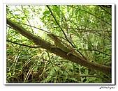 士林內湖-大崙頭山(20090607):IMG_8837.jpg