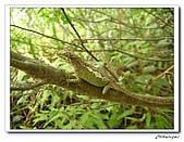 士林內湖-大崙頭山(20090607):IMG_8839.jpg