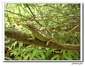 士林內湖-大崙頭山(20090607):IMG_8840.jpg