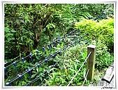 土城桐花公園:IMG_1042.JPG