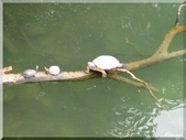 宜蘭梅花湖風景區:IMG_0652.JPG