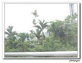 桃米生態村(20090523):IMG_7330.jpg