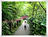 土城桐花公園:IMG_1047.JPG