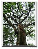 台中公園-2009讀經大會考:IMG_3719.jpg