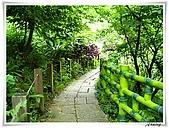 土城桐花公園:IMG_1055.JPG
