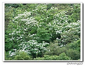 汐止翠湖200405&200605:P5020026.jpg