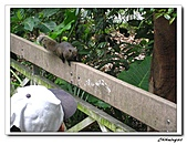 植物園(20090207):IMG_3482_nEO_IMG.jpg