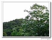 汐止翠湖200405&200605:P5020033.jpg