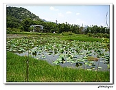 大溪十一指古道(20090502):IMG_6334_nEO_IMG.jpg