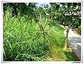 自然生態攝影(20110714Updated):IMG_5525.JPG