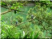 宜蘭梅花湖風景區:IMG_0715.JPG