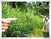 自然生態攝影(20110714Updated):IMG_5527.JPG