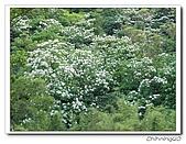 汐止翠湖200405&200605:P5020034.jpg