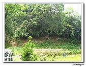 芎林鄉鹿寮坑油桐花步道(20090503):IMG_6552.jpg