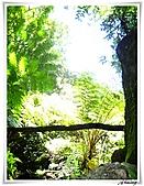 陽明山山谷遊樂區:IMG_2746.JPG