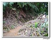 芎林鄉鹿寮坑油桐花步道(20090503):IMG_6563.jpg