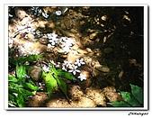 大溪十一指古道(20090502):IMG_6387_nEO_IMG.jpg