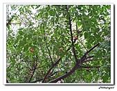 關渡宮(20090328):IMG_5926_nEO_IMG.jpg