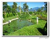 綠野森林民宿:IMG_3284.jpg