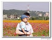 大溪台四線花海200511:PB110053.jpg