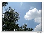 大溪十一指古道(20090502):IMG_6429_nEO_IMG.jpg