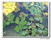 綠野森林民宿:IMG_3291.jpg