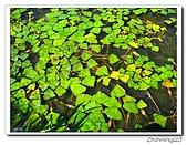 綠野森林民宿:IMG_3292.jpg