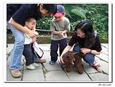 承天寺爬山(20090510):IMG_6986.jpg