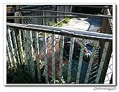 綠野森林民宿:IMG_3298.jpg