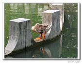 台中公園-2009讀經大會考:IMG_3635.jpg