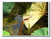 台中公園-2009讀經大會考:IMG_3639.jpg