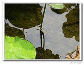 台中公園-2009讀經大會考:IMG_3640.jpg