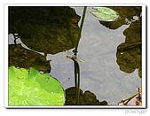 台中公園-2009讀經大會考:IMG_3641.jpg
