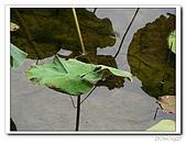 台中公園-2009讀經大會考:IMG_3642.jpg