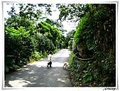 湖山國小登山步道:IMG_2434.JPG