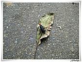 湖山國小登山步道:IMG_2435.JPG