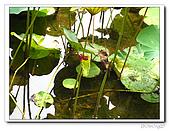 台中公園-2009讀經大會考:IMG_3643.jpg