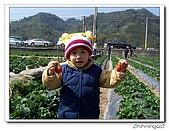 大湖採草莓200701:100_5567.jpg
