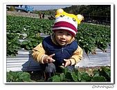 大湖採草莓200701:100_5574.jpg