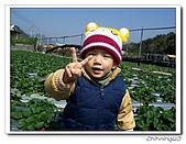 大湖採草莓200701:100_5579.jpg